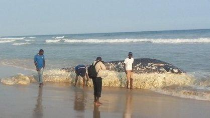 Dead whale, Ghana, undated/BBC News