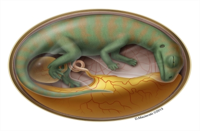 Artist's rendering of sauropod embryo/D. Mazierski, Discovery News