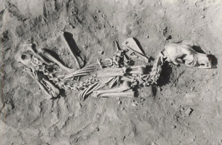 Excavated remains of buried dog, location & date unknown/Robert Losey, Discovery News
