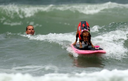 Surfer Scott Chandler & identified dog at the Purina Incredible Surf Dog Challenge, undated/Robert Ochoa, Examiner.com