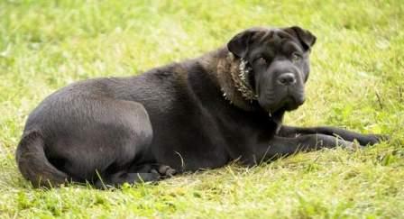 Stray dog, Detroit, undated/Todd McInturf, The Detroit News