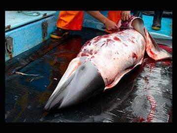 Dolphin being skinned, Peru, undated/Asociacion Mundo Azul, Los Angeles Times