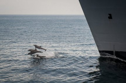 Dolphins surf bow wave of USNS Alan Shephard, location & date unknown/U.S. Navy, KPBS