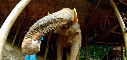 Unidentified elephant/Think Elephants International, Inc., National Geographic