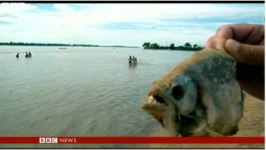 Head of palometa, relative of piranha, Parana River, Rosario, Argentina, Dec 25, 2013/Still image from news report, BBC News