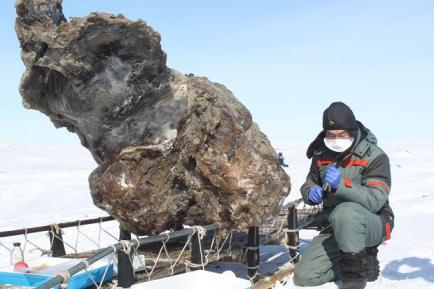 Frozen female mammoth found on remote Arctic Island, undated/Semyon Grigoryev, The Times of London