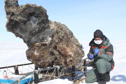Frozen female mammoth found on remote Arctic Island, undated/Semyon Grigoryev, The Times of London