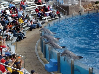 Captive dolphins and audience, SeaWorld San Diego, Dec 9, 2005/Ezra S F, Flickr.com, Treehugger.com
