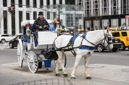 Horse, carriage, driver, NYC, undated/Jeff Bachner, New York Daily News