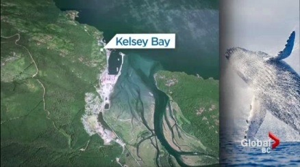 Location of collision between breaching Humpback and boat, Johnstone Strait, B.C./Global News