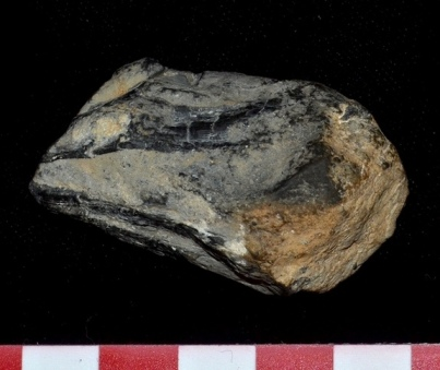Fossil found in Berlin-Ichthyosaur State Park, AZ, thought to be part of beak of giant cephalopod, undated/Mark McMenamin, LiveScience.com