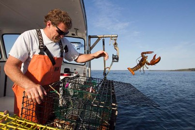 Lobster fisherman Scott Beede discards undersized catch, Mount Desert, Maine, May 21, 2012/Robert F. Bukaty, AP