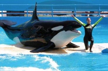 Lolita & unidentified trainer, Miami Seaquarium, undated/The Sunday Times