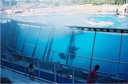 Marineland Antibes, undated/Arnaud 25 and Jean Loup P, Wiki Commons, Digital Journal