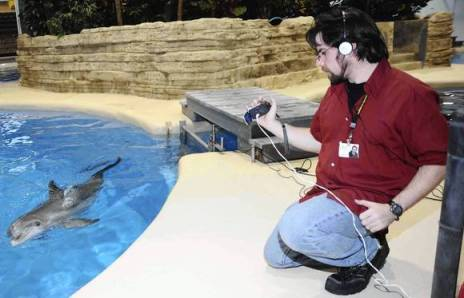 Researcher Jim Bruck with captive dolphin, Brookfield Zoo, Broofield , IL, August 12, 2013/Jim Schulz, Chicago Zoological Society, Chicago Tribune