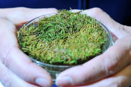 Moss grown from 400-year-old sample exposed by Arctic glacier melt/Shaughn Butts, Edmonton Journal