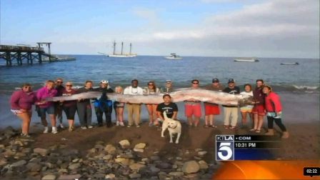 18-Foot-Long Oarfish, Catalina Island, CA, Oct 13, 2013/KTLA.com