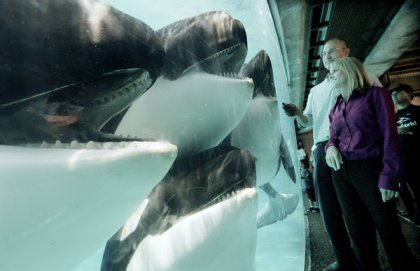 SeaWorld Orlando curator of animal training Kelly Flaherty Clark and vice president of veterinarian services Christopher Dold with four of the orcas they feel fine about keeping in tanks, SeaWorld San Diego,undated/ Sandy Huffaker, The New York Times