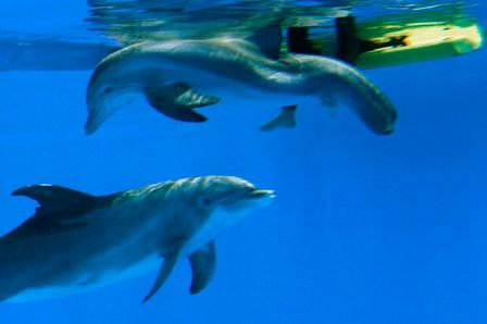 Panama and tailless Winter, Clearwater Marine Aquarium, March 2010/Jim Damaske, Tampa Bay Times