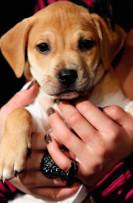 Unidentified puppy, undated/RanchoBernardo-4sranch.patch.com