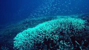 Great Barrier Reef, undated/Brisbane Times