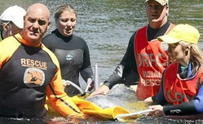 ORRCA members with stranded dolphin, Australia, undated/The Northern Star, 5/14/13