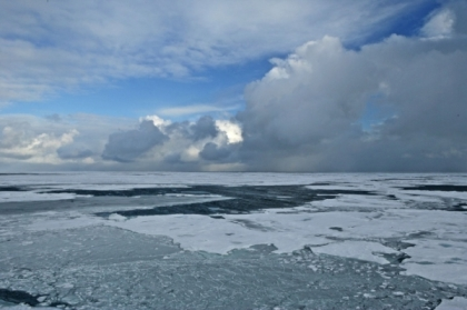 Arctic sea ice, undated/NOAA, Nature World News
