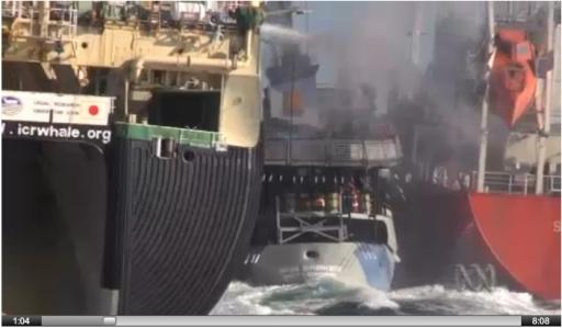 Sea Shepherd ship Bob Barker interferes with refueling of Japanese factory whaling ship/ABC News Australia