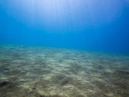 Seabed, unknown area/Science Daily