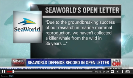 Still from CNN report about SeaWorld's full-page ads defending captivity/CNN