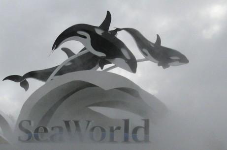 SeaWorld Entrance in Fog, undated/Matthew Belanger, Reuters, Takepart.com