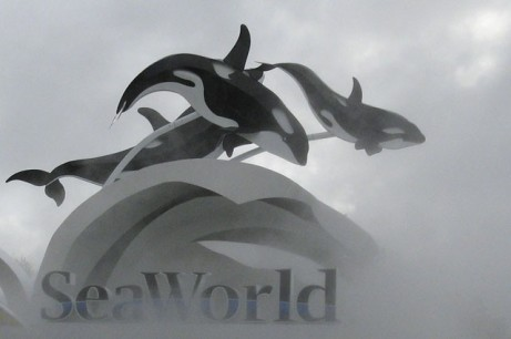 SeaWorld Entrance in Fog, undated/Matthew Belanger, Reuters, Takepart.com