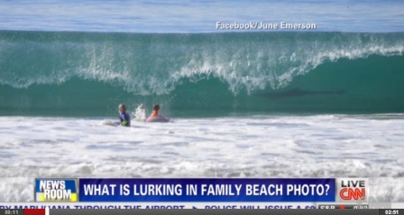 Children and juvenile Great white shark, Manhattan Beach, CA/June Emerson, CNN