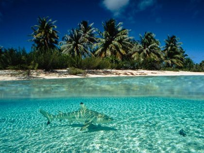 Shark off beach in French Polynesia, undated/David Doubilet, National Geographic