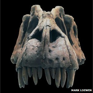 Fossil skull of Lythronax argestes (King of Gore)/Mark Loewen, BBC News