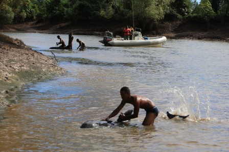 Residents try to help melon-headed whales stranded in mangrove channels, Loza Lagoon, Madagascar, March 2008/Tim Collins, WCS, IWC