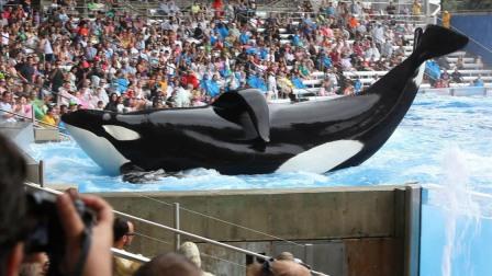 "Tilikum, SeaWorld Orlando, undated/""Blackfish,"" Sundance.org"
