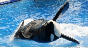 Tilikum, SeaWorld Orlando March 30, 2011, undated/Gerardo Mora, Getty, CNN