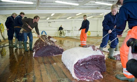 Whalers cut up Fin whale aboard whaling boat owned by Hvalur, Icelandic company that sells whale meat to Japan, undated/ Halldor Kolbeins, AFP, Getty, The Guardian