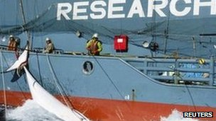 Japanese whaling ship with dead whale, undated/Reuters, BBC News