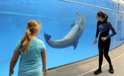 Dolphin trainer and guest with unidentified dolphin, National Aquarium, Baltimore, August 13, 2013/Lloyd Fox, The Baltimore Sun