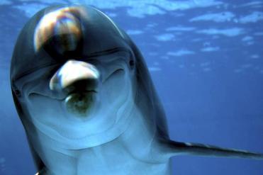 Unidentified  bottlenose dolphin/istock, The Boston Globe