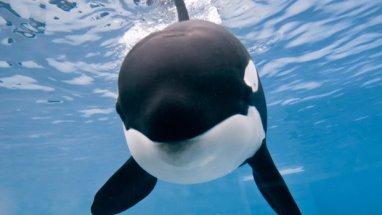 Captive-born Kalia, SeaWorld San Diego, undated/SeaWorld San Diego, U-T San Diego