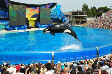 Unidentified orca, SeaWorld San Diego, Feb 6, 2012/SeaWorld San Diego, Los Angeles Times
