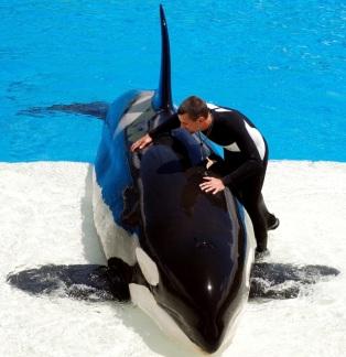 Unidentifed orca and trainer at unidentified SeaWorld park / PRNewser, mediabistro.com