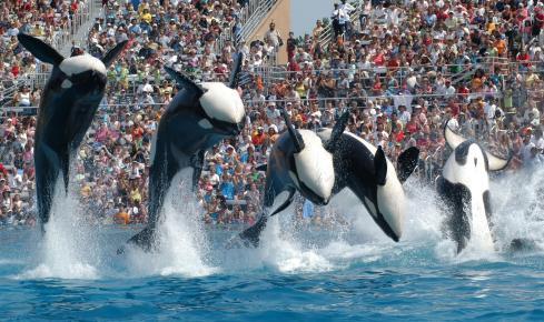 Unidentified SeaWorld Park, date unspecified/AP, Los Angeles Times