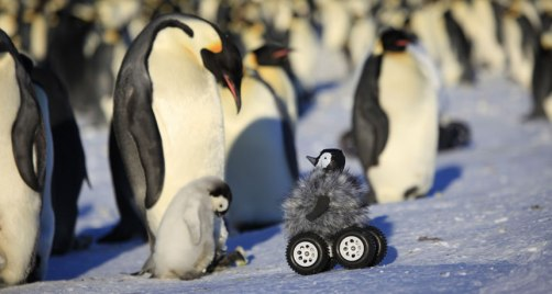Penguin cam approaches Emperor Penguin & chick, undated/Y. Le Maho et al., Nature Methods, Science News / Click for more.