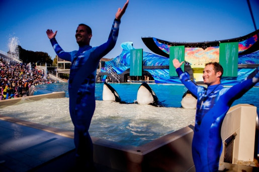 SeaWorld, location and date unspecified/Sam Hodgson, Voice of San Diego