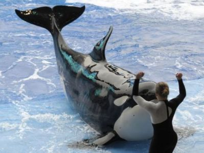 Unidentified orca and trainer, SeaWorld Orlando, 2010/AP, Orange County Register