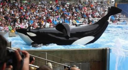 Tilikum, SeaWorld Orlando, undated/Desert News